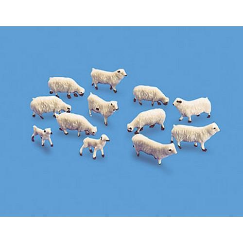 5110-sheep